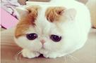为什么小猫咪反复感染病毒?